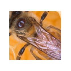 Magazine apicoltura